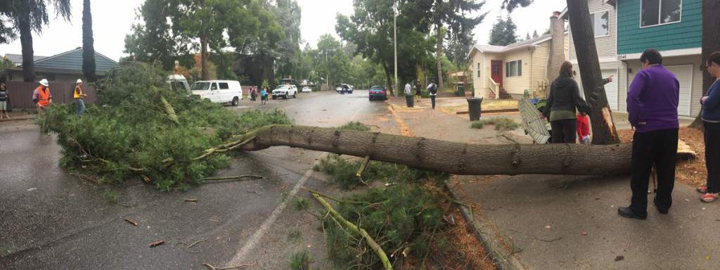 A branch is shown after it fell on 35th Avenue Northeast. (LCL photo)